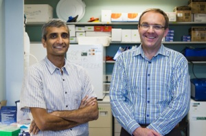 Vishy Iyer, professor of biology, and Matt Cowperthwaite, research director of St. David's NeuroTexas Institute. Photo by Alex Wang.